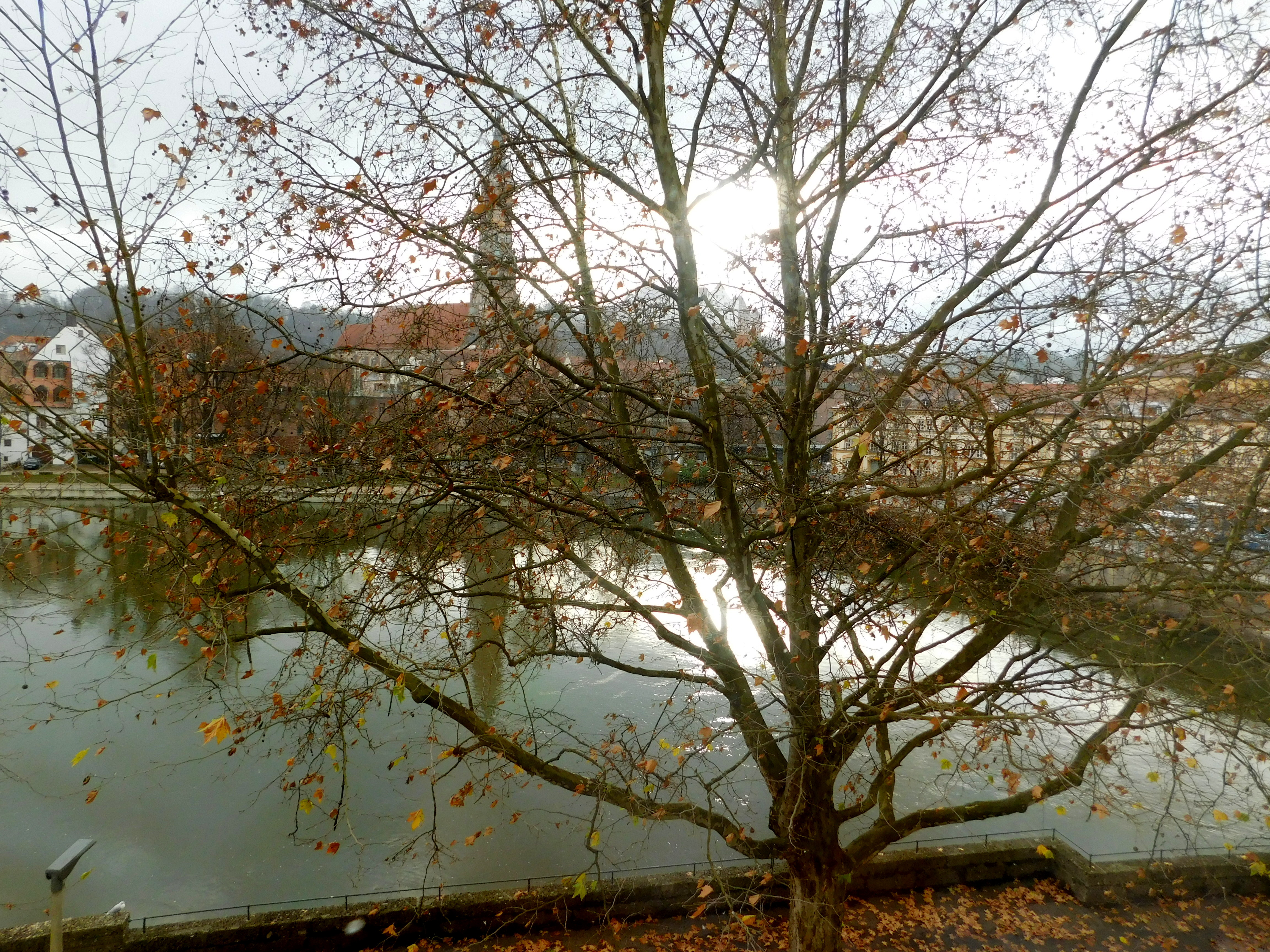 landshut tree