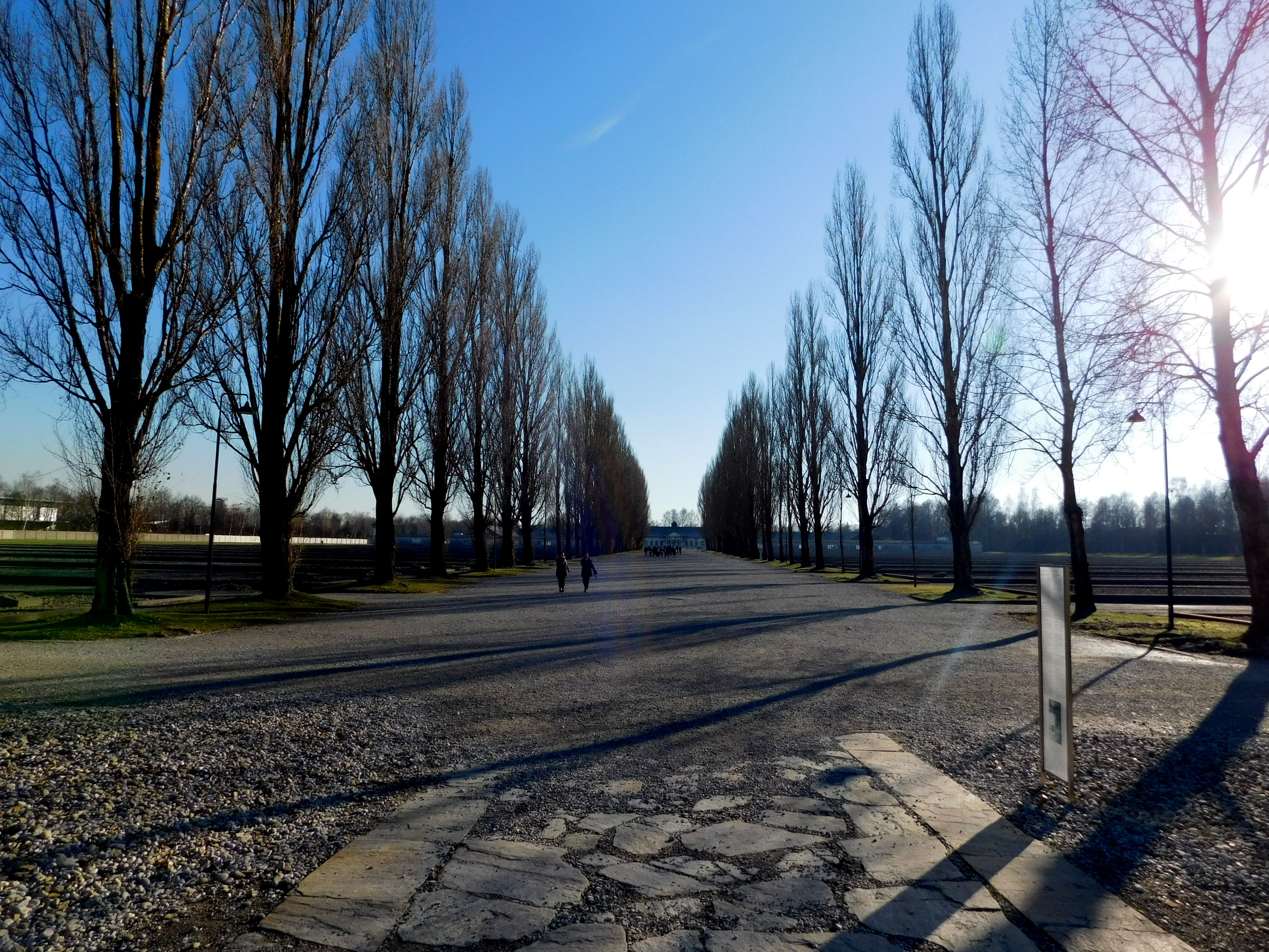 Dachau trees